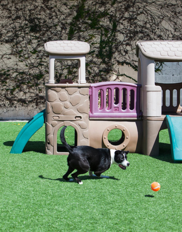 Black and white dog chasing ball by play structure